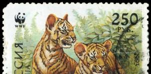 tiger-wwf-shutterstock_76138099