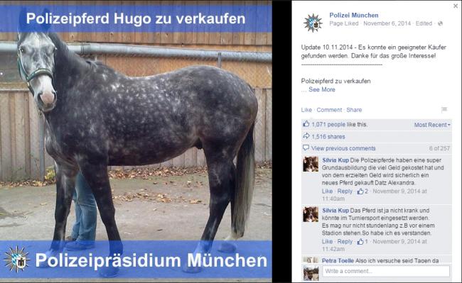 Facebookposting Pferd Hugo